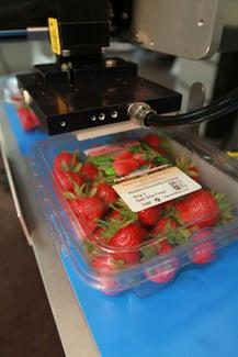 5300 Tamp Close Strawberries